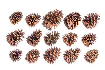Selection of fifteen different brown pine cones