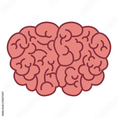 brain top view vector - photo #22