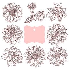 Vintage floral set. Dahlias