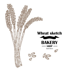 Ears of wheat. Hand drawn cereal. Bakery vector illustration