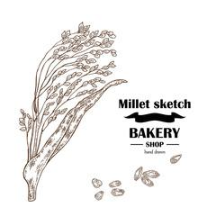 Millet sketch. Hand drawn cereal. Bakery vector illustration