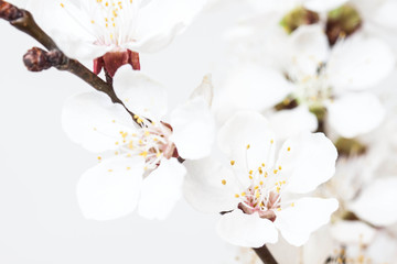Floral wallpaper. Spring flowers blossom poster. Soft blur style decor