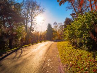 Autumn country road,Northern Ireland,UK