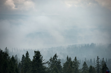 Mountain forest covered by fog