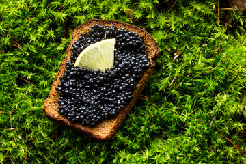 Black caviar, luxurious delicacy appetizer. sandwich with caviar on a background moss