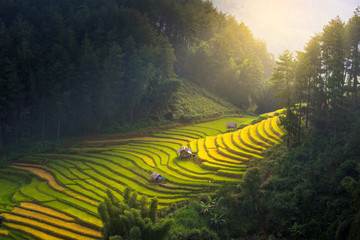 Printed roller blinds Rice fields Sunrise and Beautiful nature rice fields on terraced of Vietnam. Rice fields prepare the harvest at Northwest Vietnam.Vietnam landscapes.