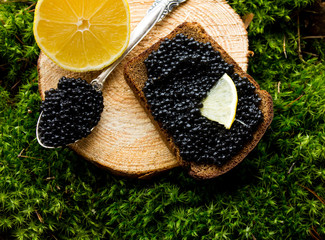 sandwich with black caviar and lemon on a background moss