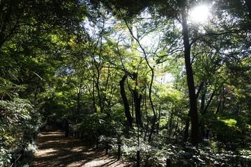 武蔵野雑木林散歩