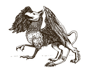 Griffin.Legendary creature. Heraldic symbol. Vintage hand drawn illustration.