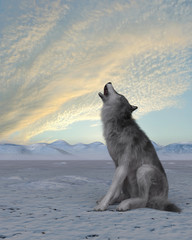 3d render of a howling wolf on winter snow background