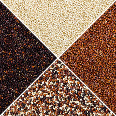 Square of yellow, red, black and mixed quinoa seeds in triangular surfaces. Edible grain crop Chenopodium quinoa in the Amaranth family, a pseudocereal. Isolated macro food photo close up from above.