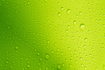 the water drop on fresh green  background