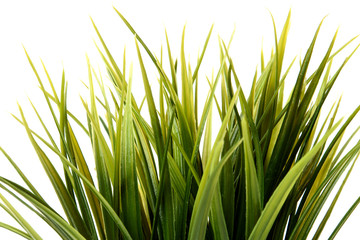 green grass in pot on white background
