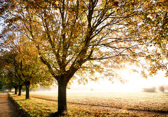 Glorious autumn golden leaf trees with a misty morning sunlight. Footpath leading through the field.