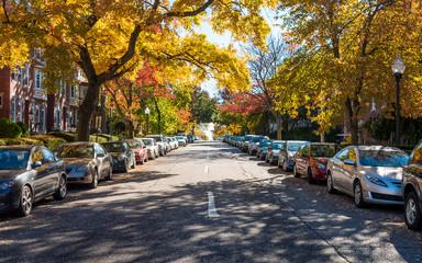 Autumn City Life
