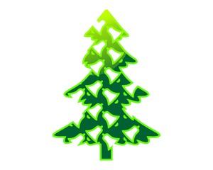 pine, fir