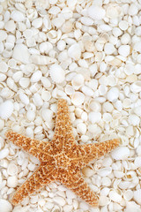 Starfish and Seashell Beauty