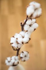 Decorative cotton