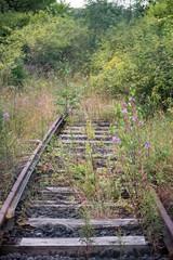 Natur, Gleise, Zug, unbenutzt