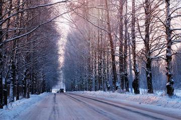 street trees winter empty