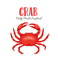Crab vector illustration in cartoon style