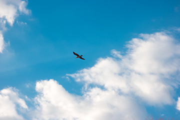 Bird on sky background. Seagull is flying. Peace and freedom. Through the clouds.