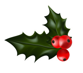 Holly Christmas Plant. Holly berry