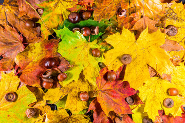 Autumn leaves and autumn chestnuts, vintage look, Autumn leaves background.