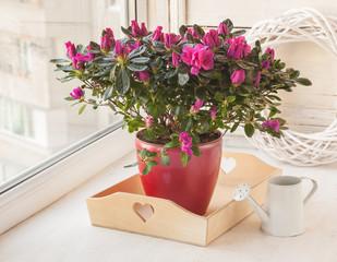 Deurstickers Azalea Crimson azalea and white watering can on the window
