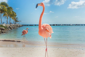 Aluminium Prints Flamingo Three flamingos on the beach