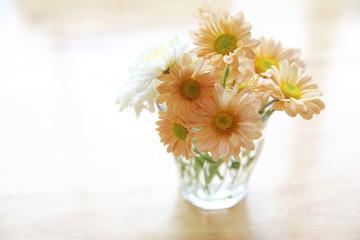 daisy flower in jar