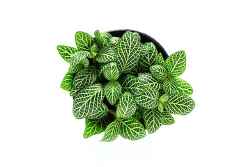 Top view of small plant pot isolate on white background.