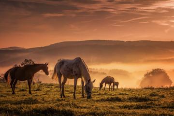 Pferde im Nebel beim grasen