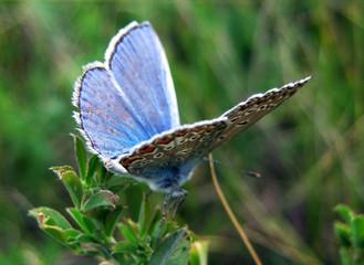 Beautiful Bitterfly