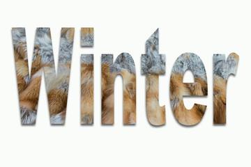 Winter Rotfuchs Pelz in einer Schriftart eingearbeitet