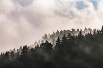 Foggy landscape with trees