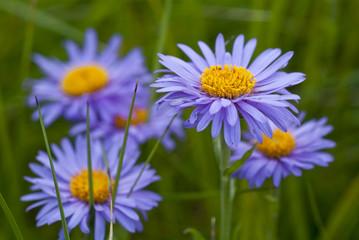 macro fiori