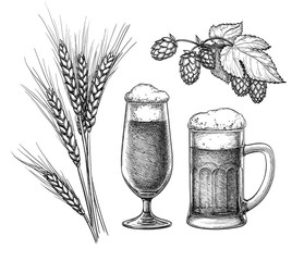 Hops, malt, beer glass and beer mug