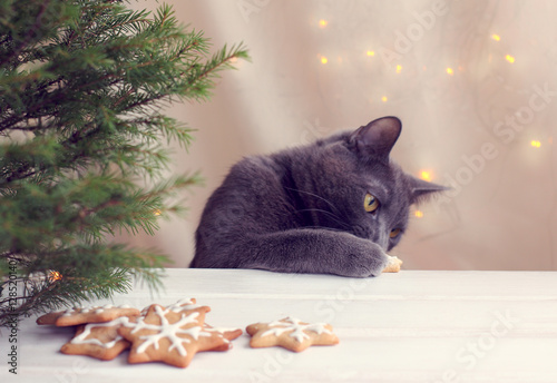 New Year cookie thief/ furry cat paw raking delicacy with festive table directly under the Christmas tree
