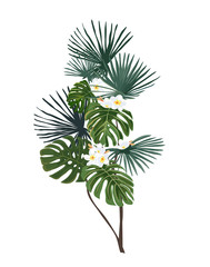 Exotic tropical leaves and flowers. Tropical tree. Isolated plant on a white background.