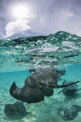 Stingray city - Cayman Islands