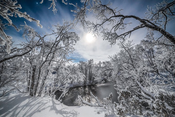 Snow covered woodland with moon, Lapland, Finland, Scandinavia, Europe