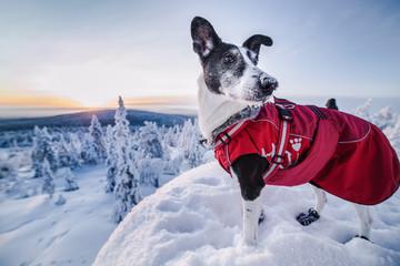 Portrait of dog in winter