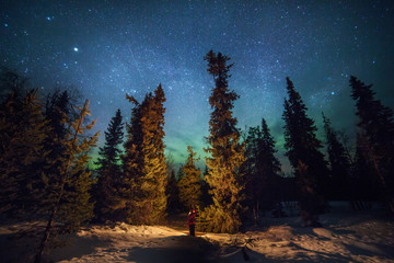 Woodland and northern lights, Lapland, Finland, Scandinavia, Europe