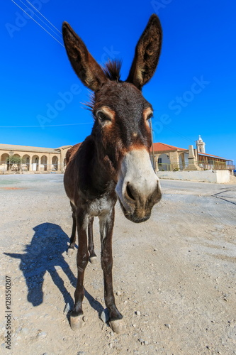 donkey in front of st andrews monastery apostolos andreas