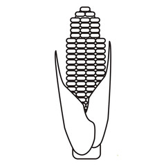 outline corn cob ripe leaves icon vector illustration eps 10