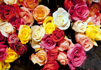 Bouquets of multi-colored Valentine roses. Horizontal.