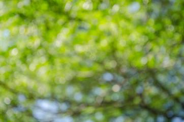 Fresh healthy green bokeh background
