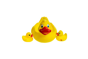 Cute yellow rubber duck isolated over white background. The family of yellow rubber ducks.