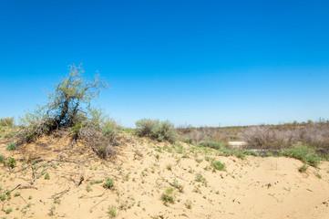 Sands Desert Spring